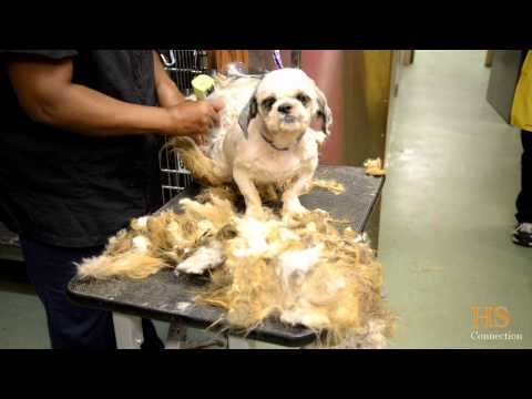 Dogs In Hoarding Case Receive Much Needed Grooming