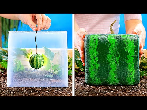 21 AMAZING PLANTS IDEAS || DIY Gardening Tricks You Should Know