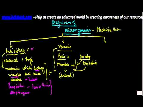 Video Biology - Usefulness of microorganisms - Medical uses