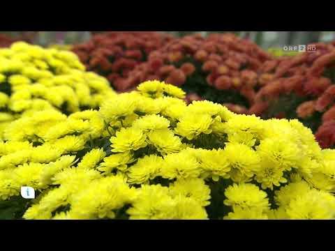Calluna und andere Herbstpflanzen