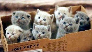Смешные кошки приколы про кошек и котов 2018 (ОЖИДАНИЕ И РЕАЛЬНОСТЬ 2 выпуск)