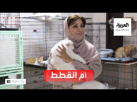 العرب اليوم - شاهد: القصة الكاملة لـ