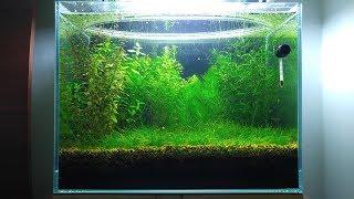 5 Months Update Baby Food, Shrimplets, Brine Shrimp, Infusoria, NO filter, NO CO2, NO Ferts 5 Gallon