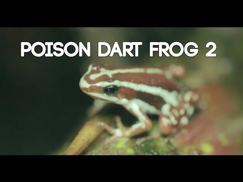 Poison Dart Frog Terrarium 2