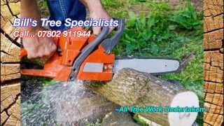 Tree Cutting Video...