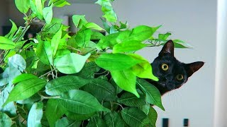 I Bought My Cat An Actual Tree