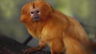 BOVESPA - Aqui está o mico do ano na Bovespa