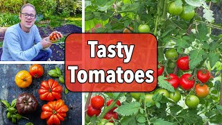 Growing Tomatoes From Sowing To Harvest