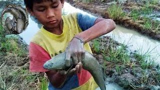 Cambodia Fishing Youtube_Cambodian Children catch fish on rice field, Battambang_How to catch fish