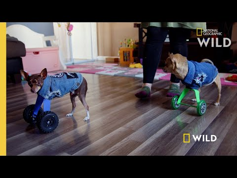 Two Dogs Run for the First Time | Wizard of Paws