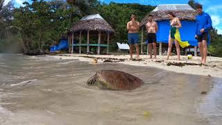 preview picture of video 'Turtle Island - Samoa'