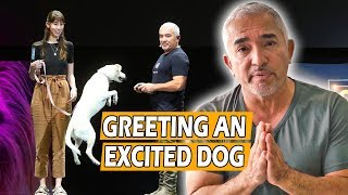 How To Calm An Excited Dog (First Meeting) - Live Dog Demo!