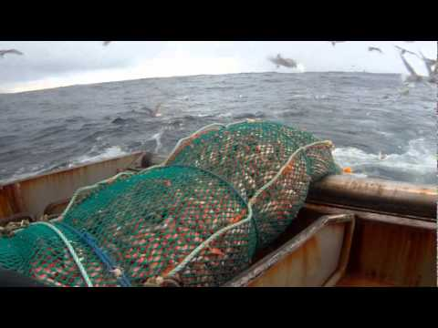 F/V Royal Pride Trawling for Rockfish