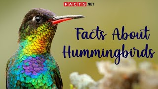 Hummingbird Facts And More About The Smallest Bird Species