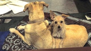 These Abandoned Pups Refused To Leave Each Other's Side – And Then They Got A Heartwarming Ending