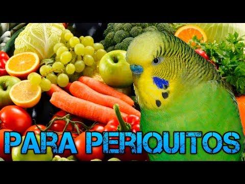 Frutas y Verduras que pueden Comer los Periquitos-Rincon animal