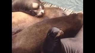dumb seals