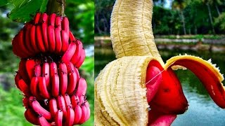 15 World's Strangest Fruits
