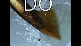 GET RID OF BEDBUGS AND ROACHES:(1)