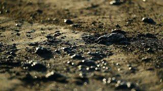 Oil spill off California coast leaves wildlife dead, popular beaches closed • FRANCE 24 English