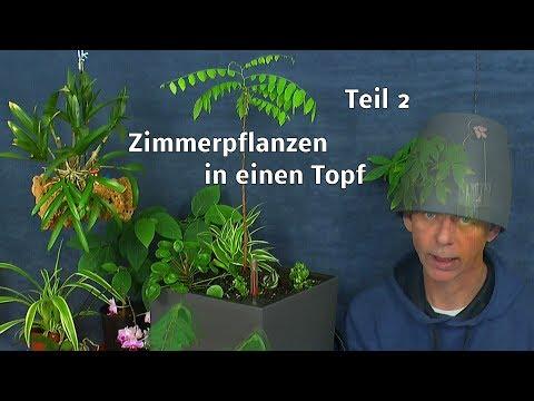Topfbepflanzung für das Zimmer mineralisches Substrat Pflanzen vorbereiten und einpflanzen Teil 2