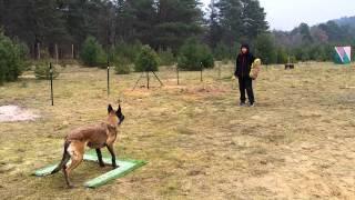 Joachim  Leconte  éducateur canin à Fontainebleau