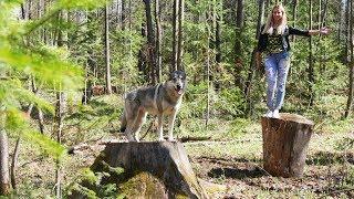 Фотосессия на пнях | Прогулка по Кировскому лесу