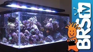 Aquarium Lighting: EP3  LED Lighting