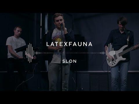 Latexfauna — Slon