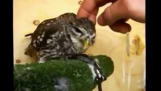 Смешные птицы Видео подборка