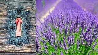 Best Secret to Germinate Lavender Seeds & Soil Recipe Tips
