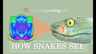 How do Snakes See | Seeing Infrared with their Pit Organ