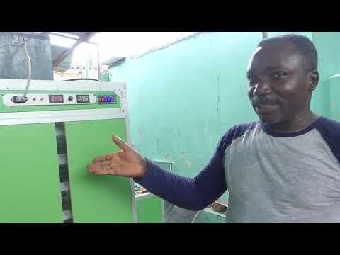 Komi Delali, champion togolais des couveuses automatiques ͠ gaz et solaire Komi Delali, champion togolais des couveuses automatiques à gaz et solaire