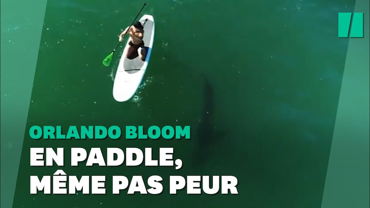 Sur son paddle, Orlando Bloom s'est fait un drôle d'ami