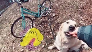 Introduire le vélo avec son chien