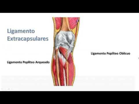 Exerciții pentru ameliorarea durerii la genunchi