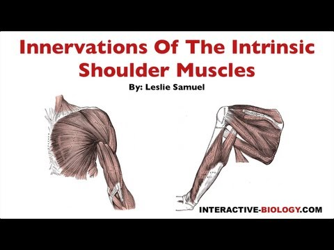 Les exercices sur les muscles de la poitrine de la photo