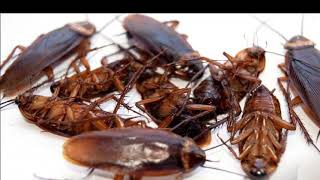 Pest Control Auburn