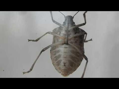 Hogyan lehet gyorsan felépülni a parazitákból