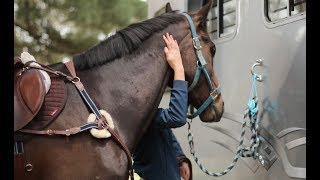 How I tack up quickly for a show jumping clinic