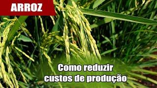 Irrigação e soja podem baixar custos no arroz