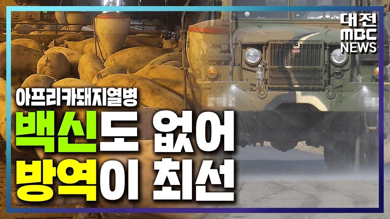 [리포트]약 없는 ASF, 방역이 최선