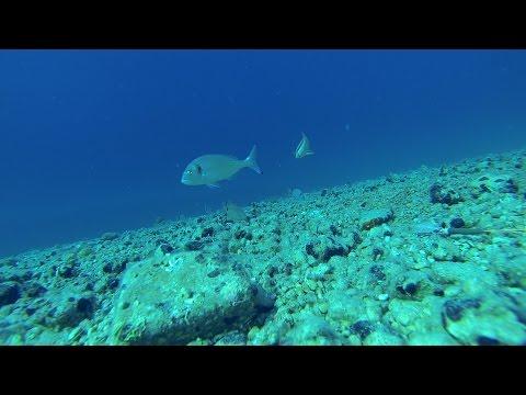 video podvodni xxx