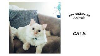 Kidzone Animals: Cats