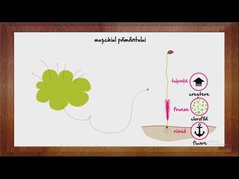 Papillomavirus verruche genitali