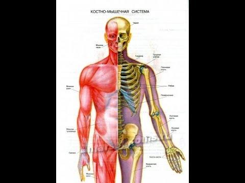 Как избавится от боли в плечевом суставе