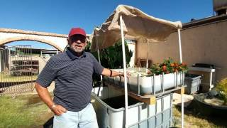 Aquaponics Can Feed Your Family With Less Space Than A Garden