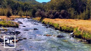 Peaceful Stream in the Forest for Relaxation, Study, Sleep | Stream Sounds, River Sounds for 1 Hour