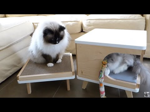 Modern Cat Furniture from PurrFur Arrives for Review – Modern Cat House and Cat Scratcher