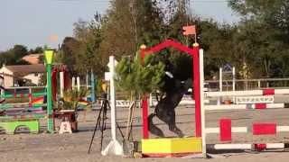 preview picture of video 'BRESSUIRE : Concours Sauts Obstacles (Centre Equestre Bressuire) 27 septembre 2014 (1)'